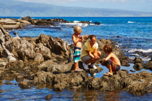 paintbox classes at the kapalua bay resort on mauii