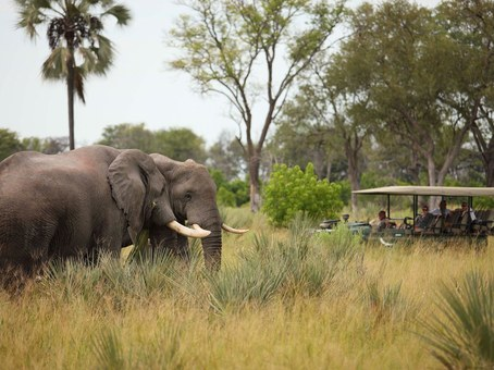 elephant on a tour at the delta camp