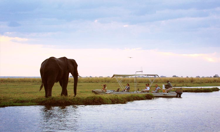 Elephant standing near a boat full of people