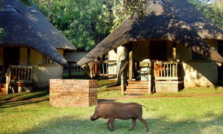 The Chobe Safari Lodge in Botswana