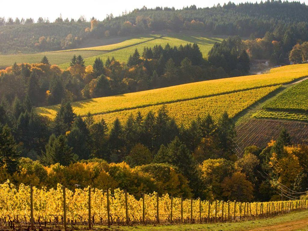 wine-region-2-lg